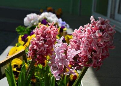 kwiaty_dzieci